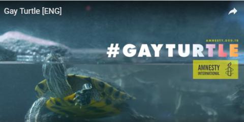 #gayturtle